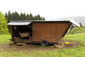 Sheep Refuge — Stock Photo