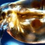 Water Flea — Stock Photo #29343609