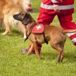 Rescue Dog Squadron — Stock Photo #29343855
