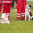 Rescue Dog Squadron — Stock Photo