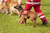 犬の救助隊 — ストック写真