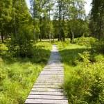 Landscape in Sweden — Stock Photo #29732197