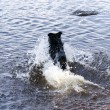 Bathing Dog — Stockfoto