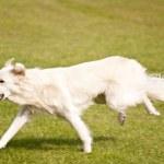 Dog Playground — Stock Photo