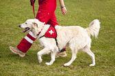 Skydd hund — Stockfoto