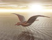 海鸥 — 图库照片