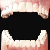 Teeth — Stockfoto