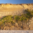 Cliff in Ahrenshoop — Stockfoto