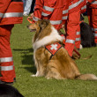 Stockfoto: Rescue Dogs Squadron
