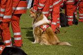 Esquadrão cães de resgate — Foto Stock