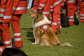 Rescue Dogs Squadron — Stockfoto