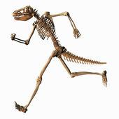 Chimeric Skeleton — Stock Photo