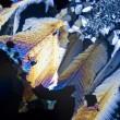 Soot particles and microcrystals in polarized light — ストック写真