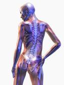 анатомия человека — Стоковое фото