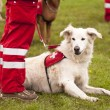 Stock Photo: Rescue Dog