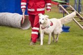 Rescue Dog — Stock Photo