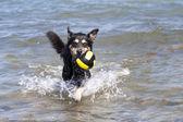Bathing Dog — Stock Photo