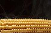 Boiled corn cob — Stock Photo