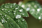 Raindrops on green leaf — Stock Photo