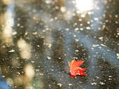 Red maple leaf fallen to a puddle — Stock Photo