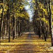 Foto Stock: Autumn lane