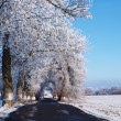 Stock Photo: Winter road