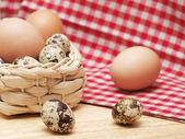 Křepelky a slepičí vejce — Stock fotografie