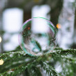 Bubble sitting on fir-tree — Stock Photo #18337267