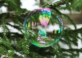 A bubble sitting on a fir-tree — Stock Photo