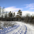 Forest scenery in winter (snowy) — Stok fotoğraf