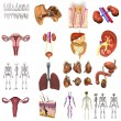Foto Stock: Collection of 3d renders - organs