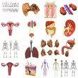 Collection of 3d renders - organs - Stock Photo