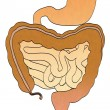 Stock Photo: Cartoon image of digestive system