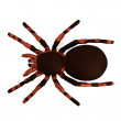 Stock Photo: Realistic 3d render of tarantula