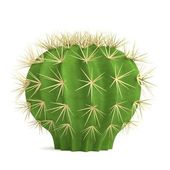 Realistic 3d render of cactus — Stock Photo