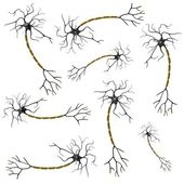 Realistic 3d render of neuron — Stock Photo