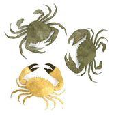 Realistic 3d render of crustacean - crabs — Stock Photo