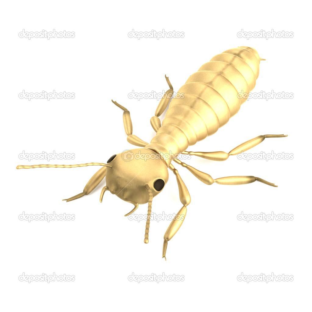 Termite: Termite Nymph Size