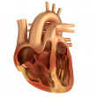 Realistic 3d render of human heart — Stock Photo #45419839