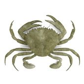 Realistic 3d render of crustacean - liocarnicus vernalis — Stock Photo
