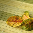 Stock Photo: Autumn leaves on mat