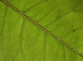 Pattern green leaf — Stock Photo