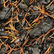 A charred wood sprinkled with spruce pine needles — Stock Photo