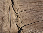 Old dried wood with crack — Photo