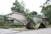 Large tree fell over — Stock Photo
