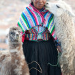 Stock Photo: Womwith her lamas - Cusco, Peru