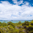 Rangitoto Island New Zealand — Stock Photo