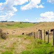 Stock Photo: Countryside of New Zealand near Rotorua
