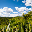Stock Photo: Lush Landscape near Rotorua, New Zealand
