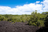 Volcanic Landscape - Rangitoto Island, New Zealand — Stock Photo